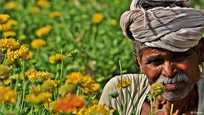 Marigold flowers sales grew on Deepawali in Kasganj Uttar Pradesh