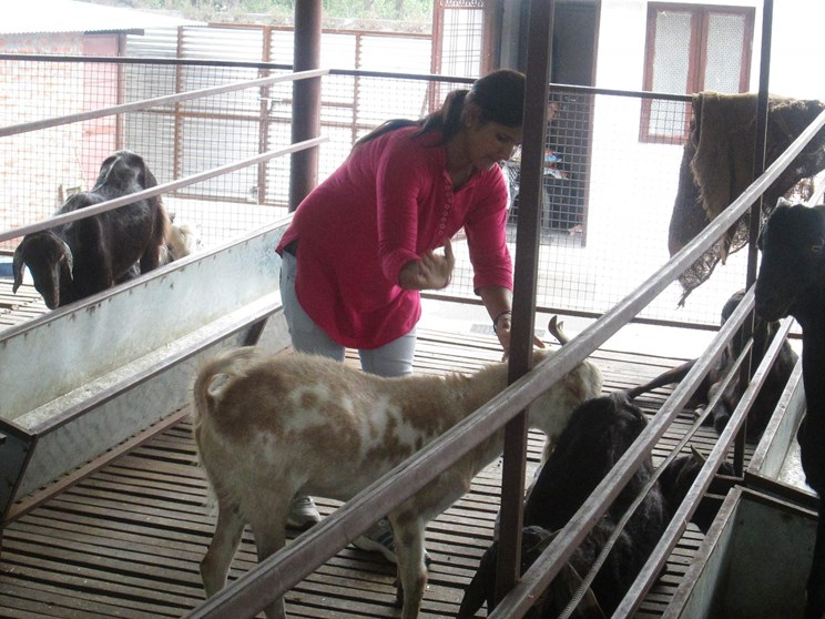 Goat rearing started leaving the best institutes in the country, earning millions