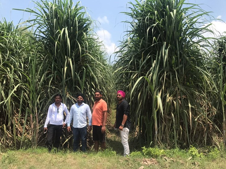 1318 quintals of sugarcane stems in one acre, the highest in Khari's Achal fixed Uttar Pradesh