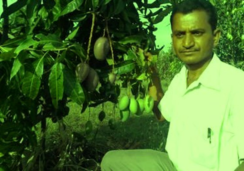 Millions of profits earned from mango teak trees