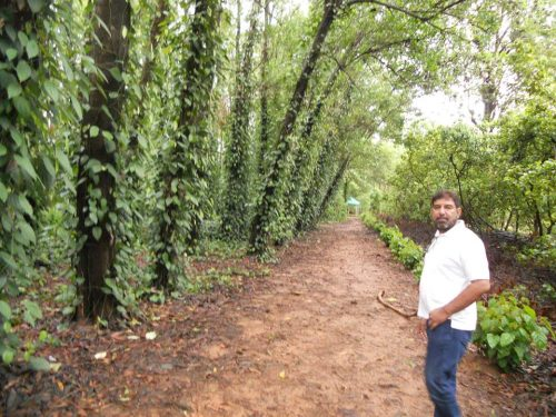 Rajaram Tripathi does more than 70 herbs farming is also happening in foreign countries