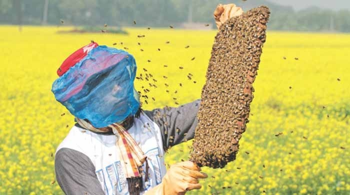 Bee keeping can earn one lakh rupees in a month