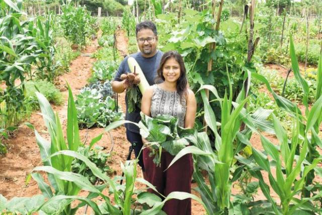 37 year old Geetanjali being an organic Farming company being the example for everyone