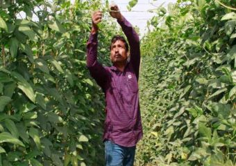 Farmers earning millions of crores by distributing vegetables