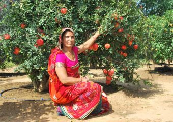 Madabag village of Himachal is becoming rich with the help of apple cultivation