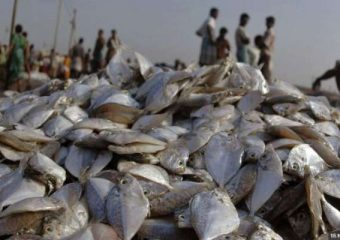 Jharkhand farmer earns RS 14 lakh from Fisheries