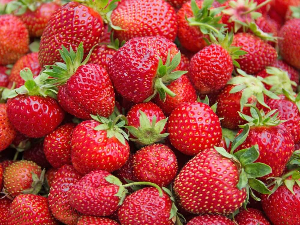 Farmer is earning Rs. 12 Lakh per acre by cultivating strawberry