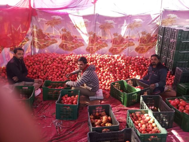 Farmer earning 28 lakh rupees annually by cultivating pomegranate