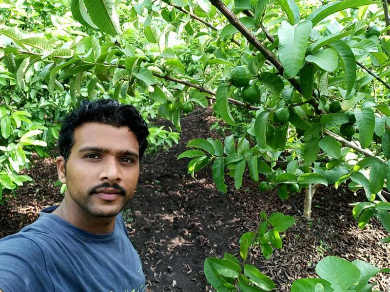 Young farmer earns 30 Lacs by cultivating Taiwan Guava fruits in Madhya Pradesh