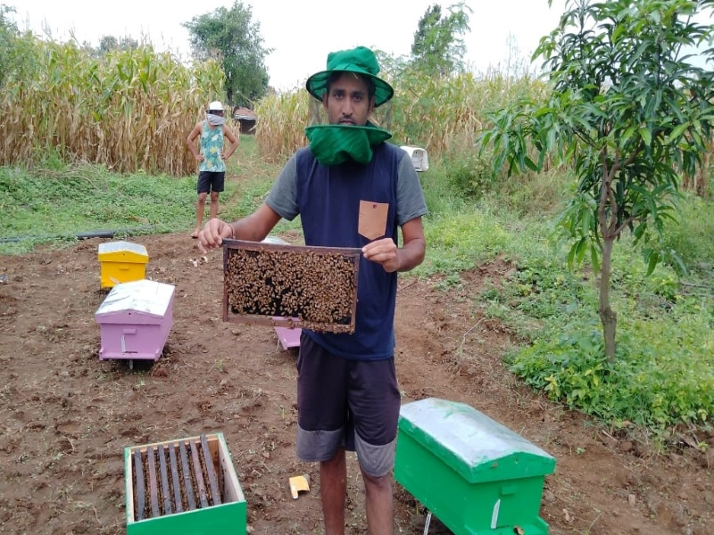 Young farmer earns 7 lacs by beekeeping in Madhya Pradesh