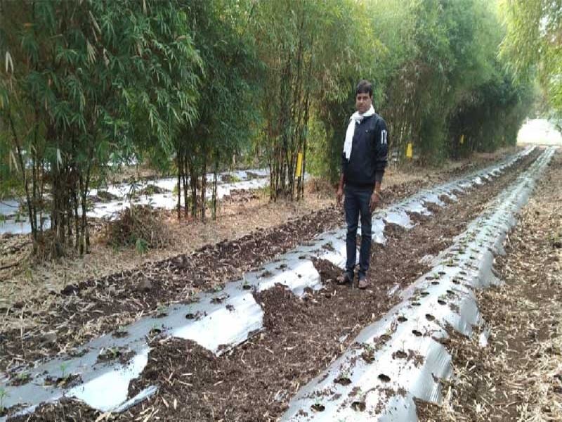 Vijay Patidar is earning huge profits from Bamboo Cultivation